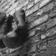 Entrepreneurship Boxing